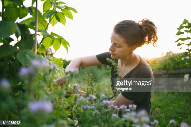 Young woman in organic urban gardening project at raised bed