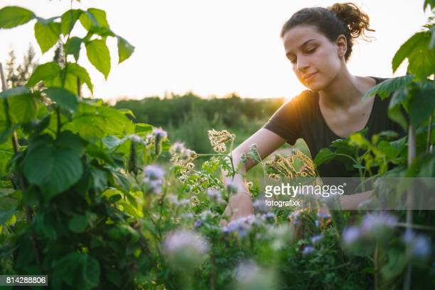young woman in organic urban gardening project at raised bed - gardening stock pictures, royalty-free photos & images