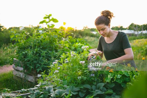 Mujer joven en proyecto de jardinería urbana orgánica en cama elevada