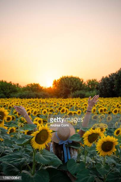 young woman in sunflowers field at sunset - straw hat stock pictures, royalty-free photos & images