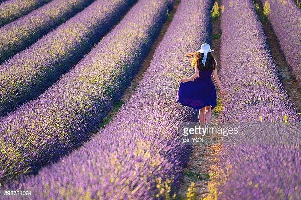 young woman in the lavander field - purple dress stock pictures, royalty-free photos & images