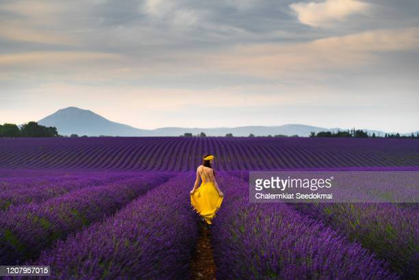 young woman in the lavender field, provence, france - lavender color ストックフォトと画像