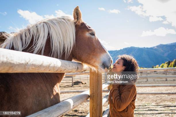 young woman in western corral with horse - lifestyle stock pictures, royalty-free photos & images