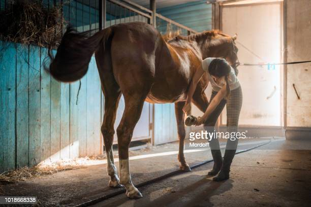 young woman is cleaning horse's hoof in stable - horse stock pictures, royalty-free photos & images