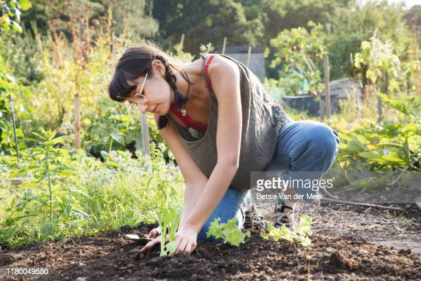 young woman is planting young plants into soil at allotment. - gardening stock pictures, royalty-free photos & images