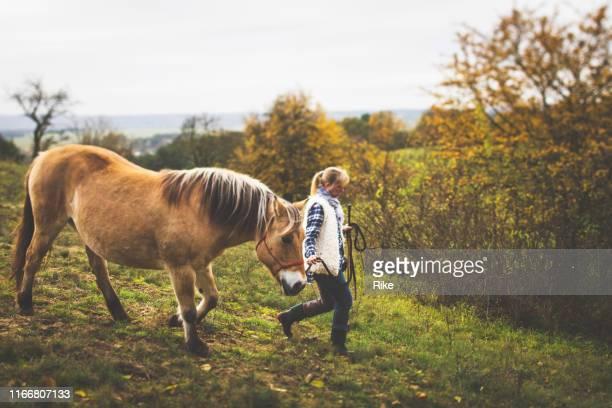 jonge vrouw loopt met haar paard in de bossen op een koele herfst dag - paard paardachtigen stockfoto's en -beelden