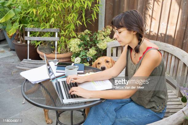 young woman is working on laptop while labrador dog looks on. - one young woman only stock pictures, royalty-free photos & images