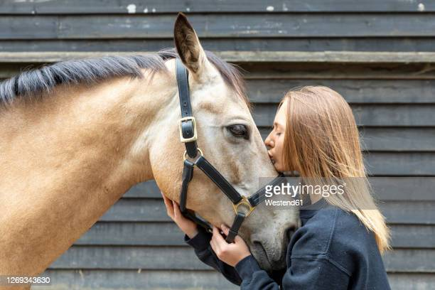 young woman kissing her horse - animal stock pictures, royalty-free photos & images