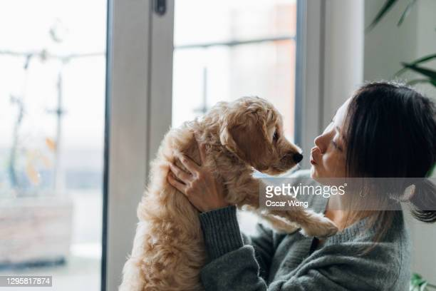 young woman kissing her puppy - responsibility stock pictures, royalty-free photos & images