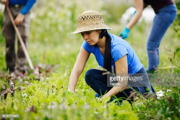 Young Woman Kneeling Down Tending To Farm Crop