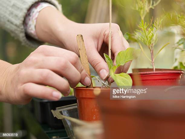 Young woman labeling plant in greenhouse