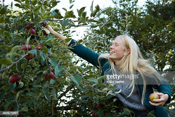 Young woman laughing & picking apples from tree