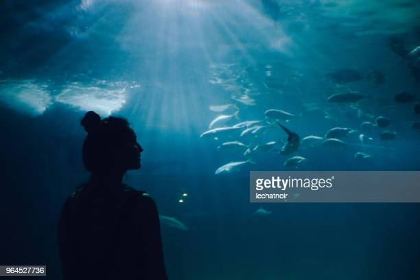 young woman looking at fish in the aquarium - zoo stock pictures, royalty-free photos & images
