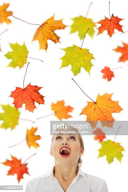 young woman looking at maple leaves while standing against white background - maple leaf stock pictures, royalty-free photos & images