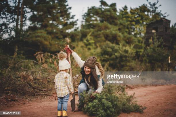 young woman looking for a christmas tree in the forest with her daughter - country christmas stock pictures, royalty-free photos & images