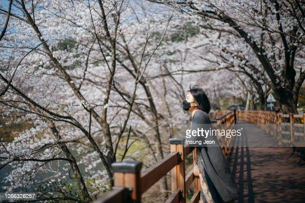 young woman looking up to see the cherry blossom in park - zuid korea stockfoto's en -beelden