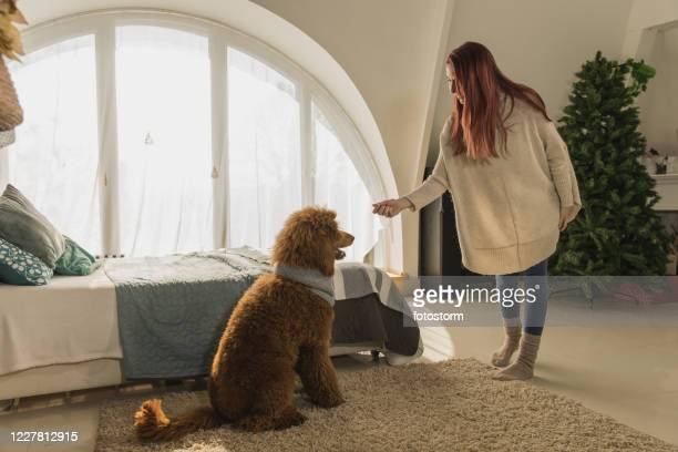 young woman obedience training her dog - stunt stock pictures, royalty-free photos & images