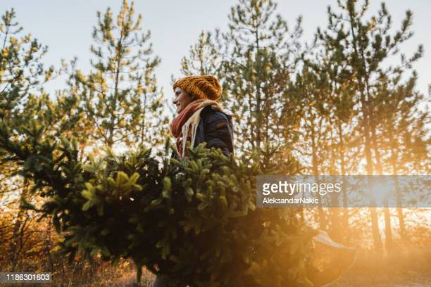 young woman on a christmas tree farm - christmas tree farm stock pictures, royalty-free photos & images