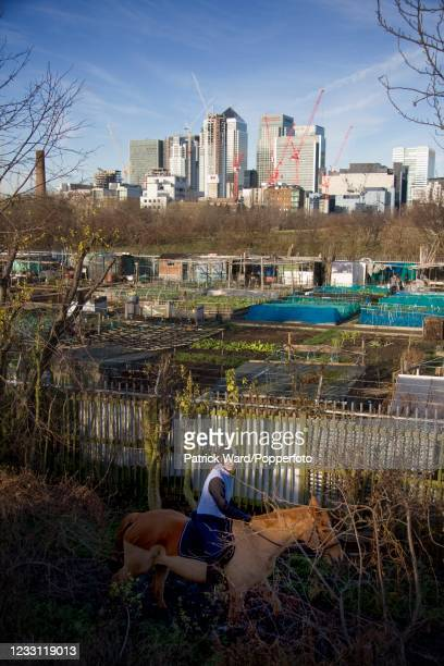 Young woman on horseback riding past allotments at Mudchute Farm and Park, a 32-acre local Nature Reserve and the largest urban farm in Europe, on...