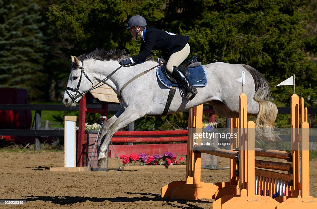 Young Woman On Thoroughbred Gray Horse Clearing A Jump At An Outdoor News Photo Getty Images