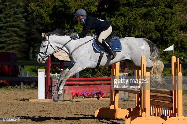 Young woman on thoroughbred Gray horse clearing a jump at an outdoor equestrian show competition