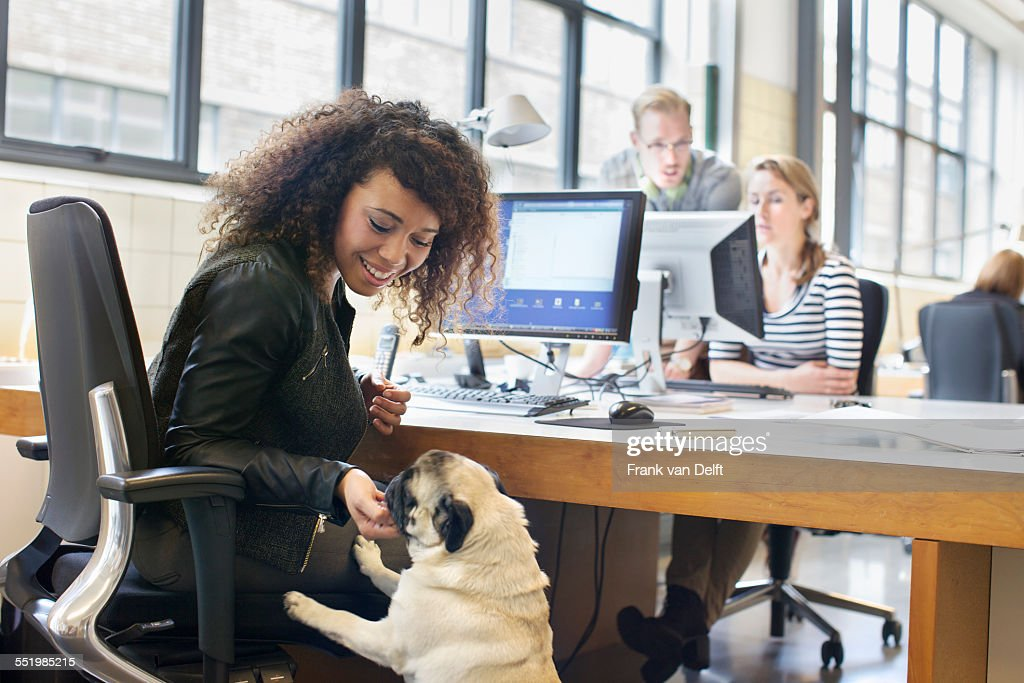 Young woman petting dog at office desk : Stock Photo