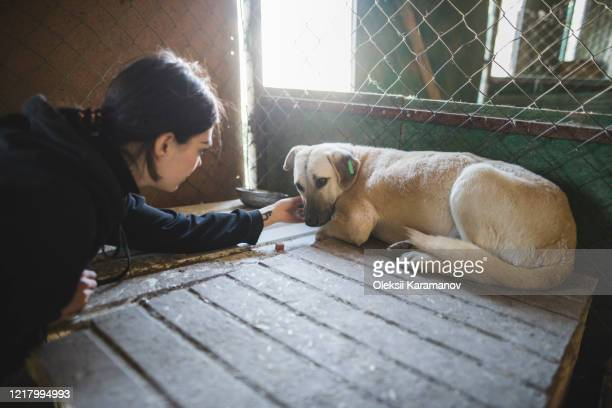 young woman petting sad dog in animal shelter - rescue stock pictures, royalty-free photos & images