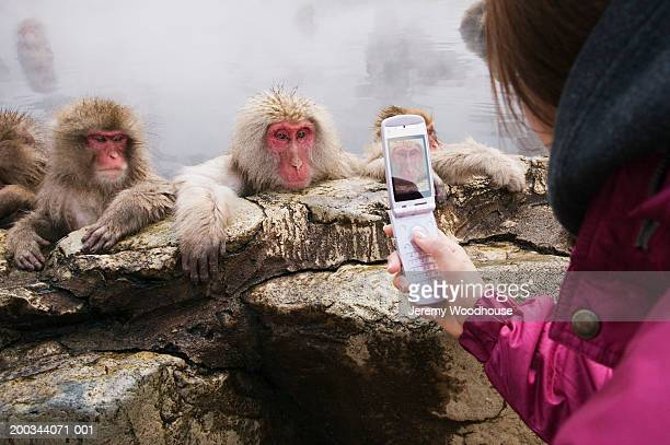 young woman photographing japanese macaques with camera phone - jeremy woodhouse stock photos and pictures