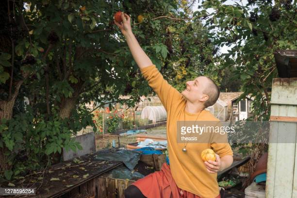 young woman picking apples - theasis stock pictures, royalty-free photos & images