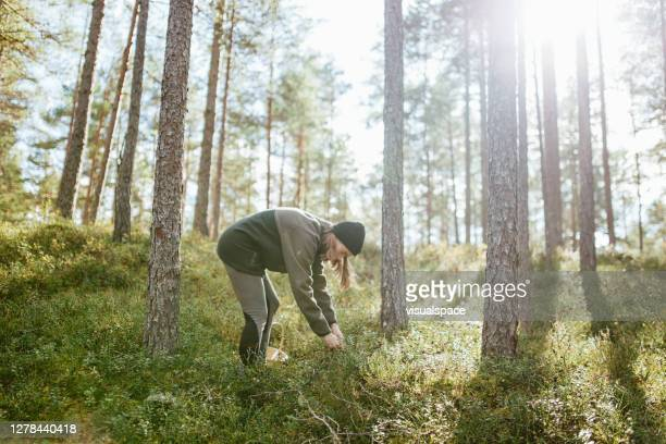 young woman picking berries - named wilderness area stock pictures, royalty-free photos & images