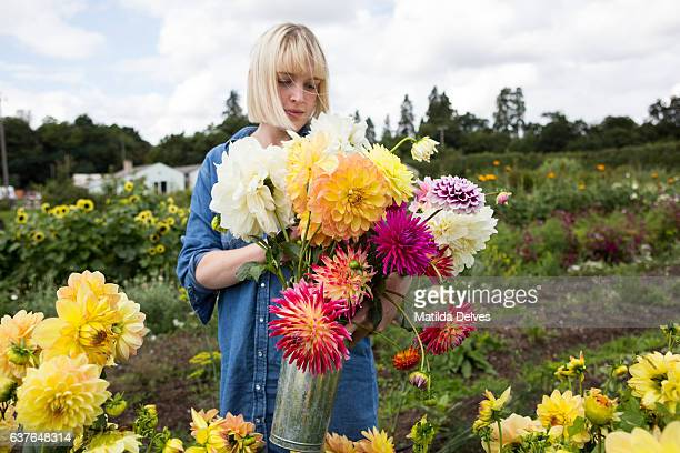 Young woman picking Dahlia flowers on a flower farm