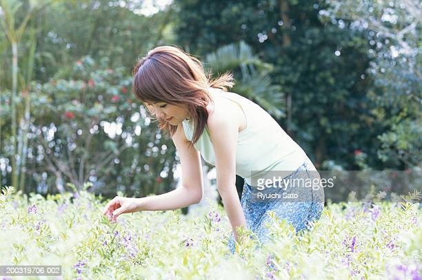 young woman picking flower in field, side view - bending over in skirt stock pictures, royalty-free photos & images