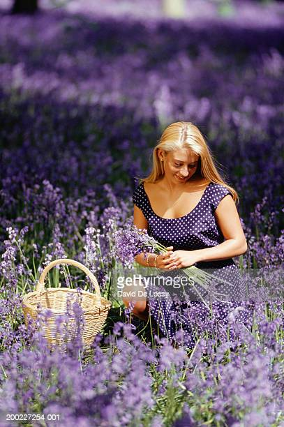 young woman picking wild flowers - african violet stock photos and pictures