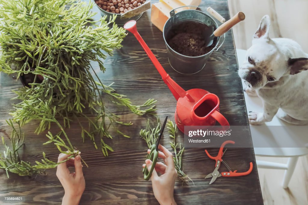 Young woman planting cactuses : Stock Photo