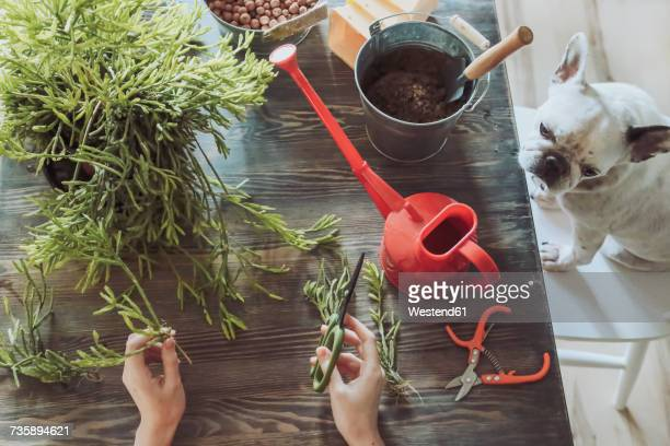 Young woman planting cactuses