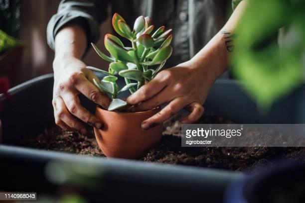 mujer joven plantando flores - planta carnosa fotografías e imágenes de stock