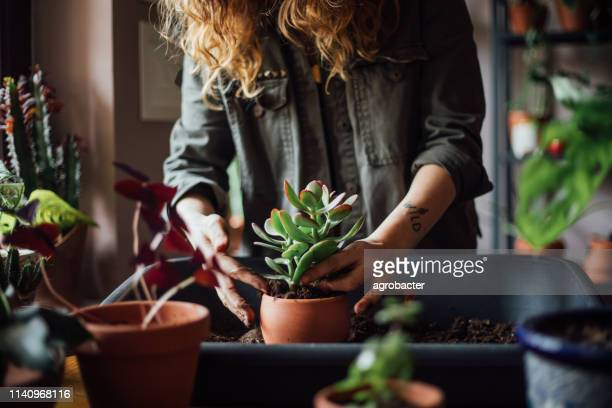 young woman planting flower - garden center stock pictures, royalty-free photos & images