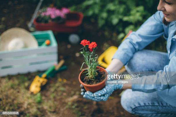 Young woman planting flower...