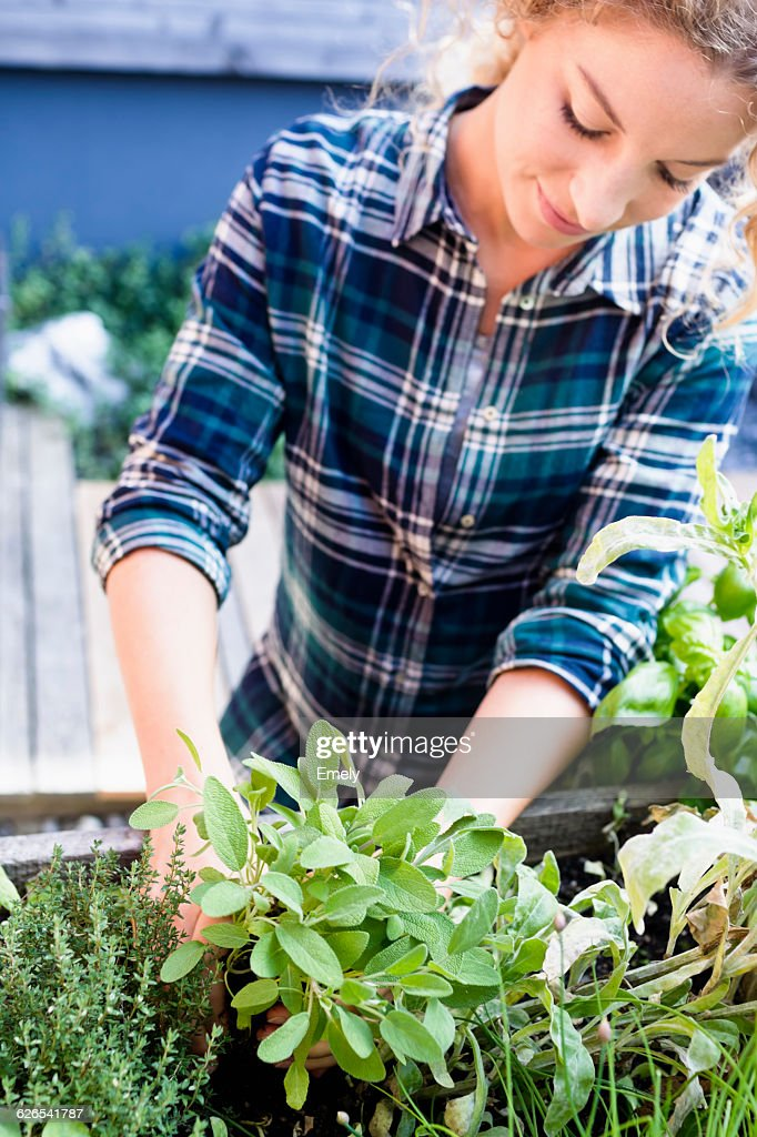 Young woman planting herbs in herb garden : Stock-Foto