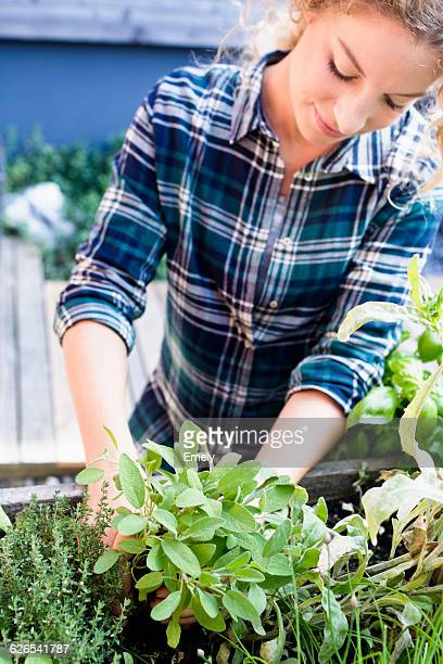 Young woman planting herbs in herb garden