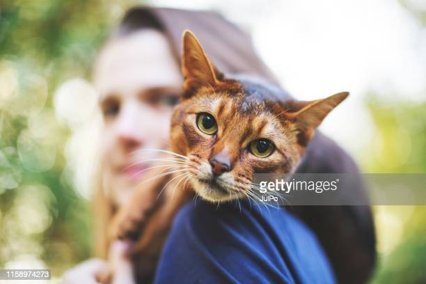 young woman playing with cat - feline stock pictures, royalty-free photos & images