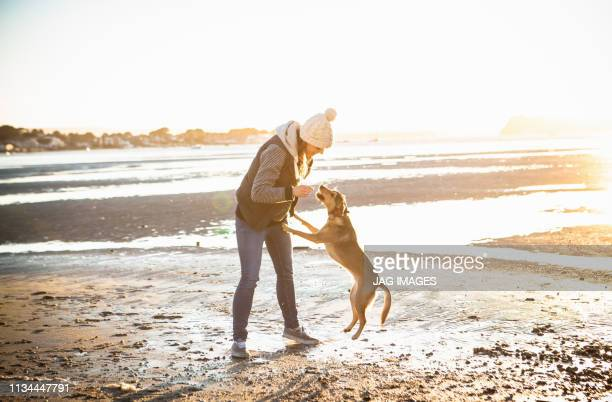 young woman playing with her dog on the beach - winter stock pictures, royalty-free photos & images