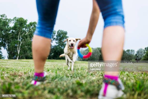 young woman playing with her dog outdoors - obedience training stock pictures, royalty-free photos & images