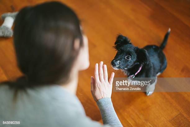 young woman playing with her dog - obedience training stock pictures, royalty-free photos & images