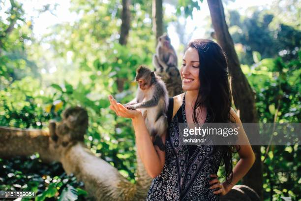 young woman playing with monkeys in ubud, bali, indonesia - monkey stock pictures, royalty-free photos & images