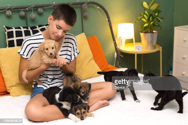 young woman playing with puppies and cat - black hairy women stock pictures, royalty-free photos & images