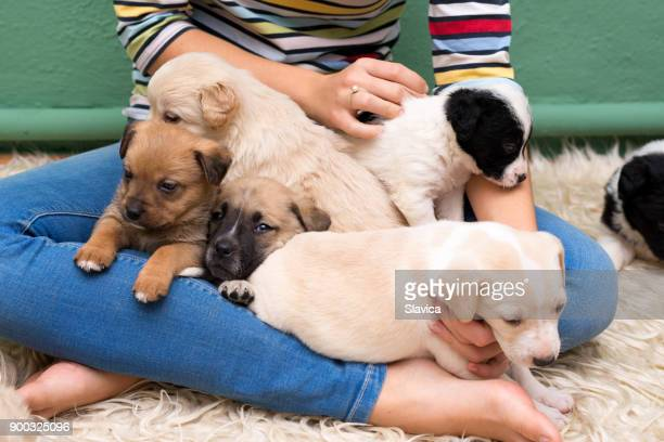 Young woman playing with puppies