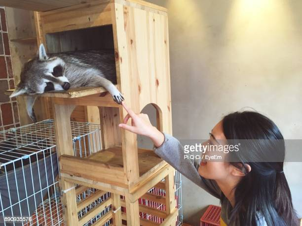 Young Woman Playing With Raccoon In Cage At Home