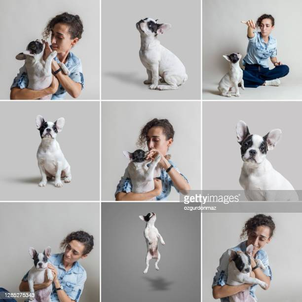 jonge vrouwenportretten die met haar franse puppy van de buldog over grijze achtergrond spelen. knuffelen, huisdier vriendschap, geïsoleerde grijze achtergrond, studio geschoten - mid adult men stockfoto's en -beelden