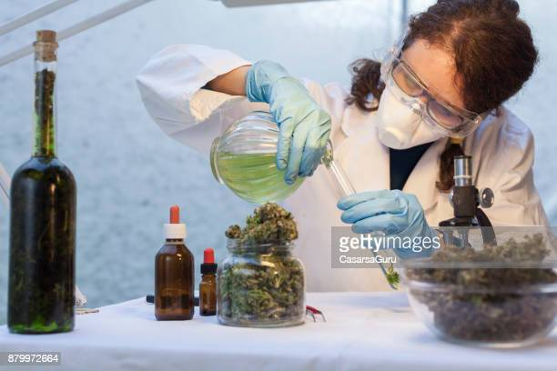 young woman preparing homeopathic medicine from marijuana - medical cannabis stock pictures, royalty-free photos & images